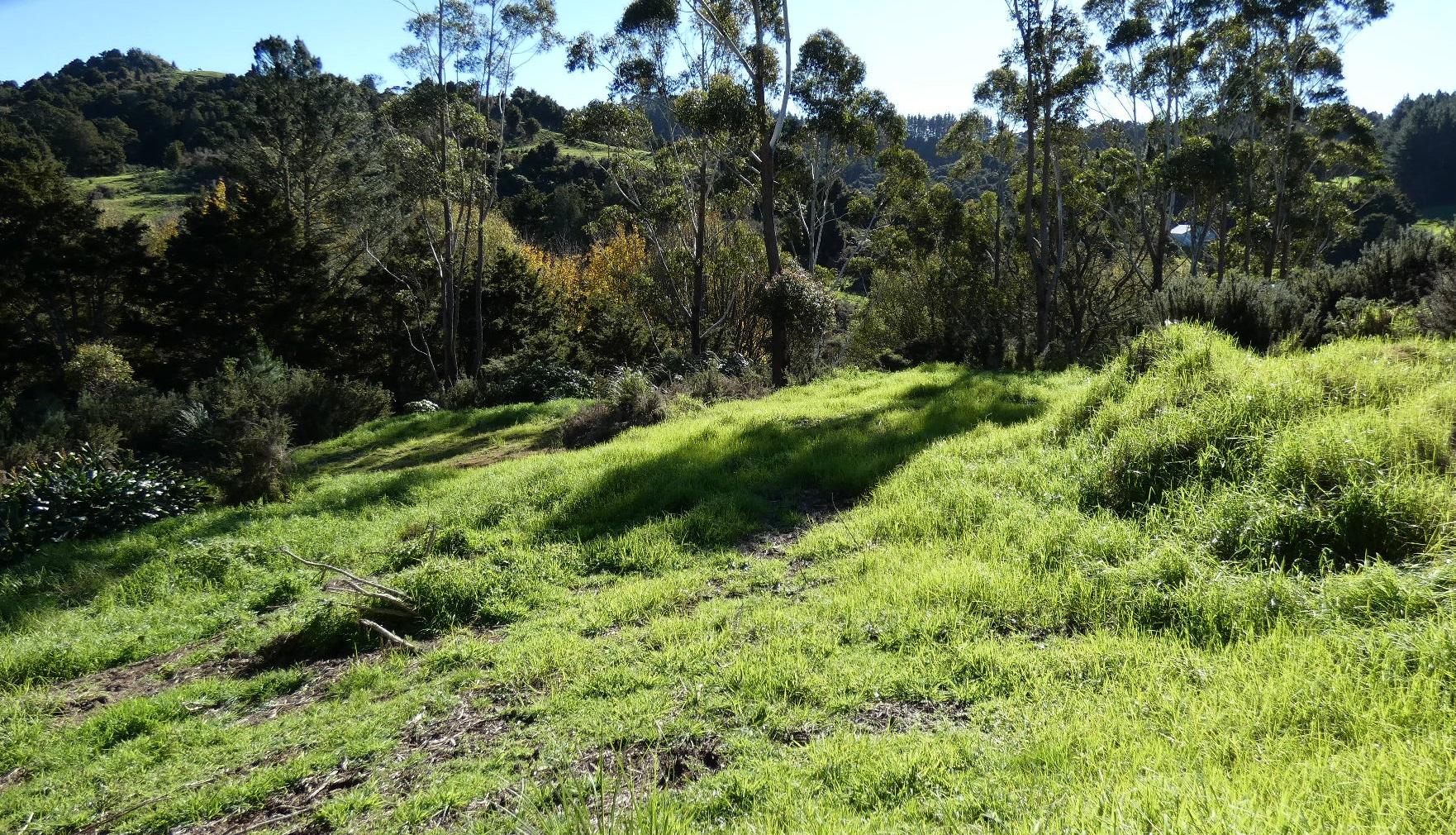 1 Acre – Grant Rd, Waipu – Calm, Peaceful Oasis